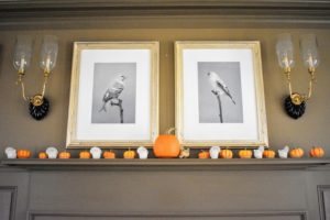 The mantel in my Brown room is filled with pumpkins grown right here at my farm. They look so pretty underneath the avian prints.