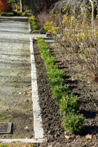 Once the area is filled with bulbs, they're covered with earth and fresh compost.