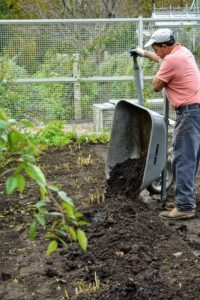The next step is to cover the beds with composted mulch. Carlos places a generous amount in clumps along each bed.