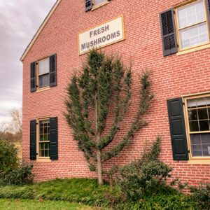 "The shop is housed in the original 1828 family farm home that the Phillips acquired in 1890. Called ""The Woodlands"", the shop offers fresh, jarred and dried mushrooms, as well as unique mushroom gifts and recommended books. Visitors can also see the Farm's mushroom exhibit to learn about the Farm's history and the science behind mushroom growing."