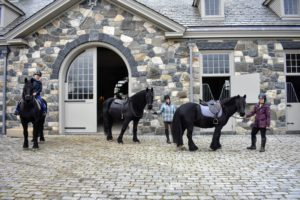 Here is my stable crew heading out for a ride - my horses are well exercised every single day.