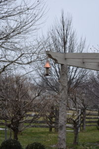 The granite pergola also provides a wonderful lookout for perching birds. I am glad the birds can depend on food here at the farm all year long. The bird feeder is my copper feeder available from my collection on QVC.