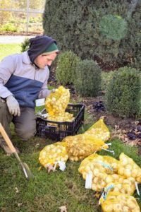 Here's Ryan sorting through more of the spring-blooming bulbs we ordered for the farm this season. Until they are in the ground, they're stored in the gym garage. I order the bulbs not only for Bedford, but also for my gardens in East Hampton and Maine.