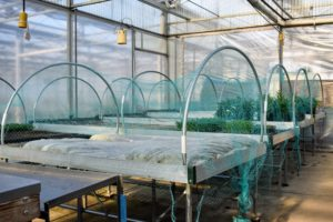 The propagation room is adjacent to the large greenhouse. It is where many of the crops are started from seed.