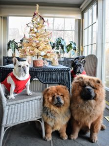It was the perfect backdrop for a photo of my dear doggies - French Bulldogs Creme Brulee and Bete Noire, and my Chow Chows Empress Qin and Emperor Han. I hope you're all enjoying this holiday season with family and good friends. Share your favorite decorations with me in the comments section below. Tomorrow I will share photos of my outdoor decor.