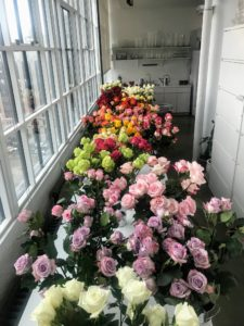 Here are just some of the many rose colors and varieties available. They include 'Escimo', 'Ocean Song', 'Vania', 'Lemonade', 'Lola' and 'Quicksand'.