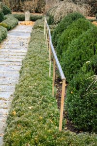 Here is a frame built along the boxwood lining the footpath in the sunken garden.