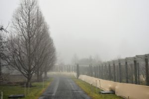 Here is the carriage road to my home – with the beautiful bald cypress trees on the left and my long pergola on the right. The fog was thick throughout the New York City region. On my way to work, we could barely make out the George Washington Bridge.