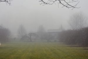 "The ""Party Lawn"" behind my winding pergola is hard to identify - the atmosphere is so thick with fog. The structure on the right is my old corn crib."