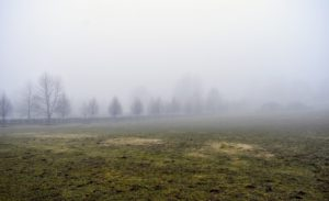 Look at the fog across the paddock – it is so heavy. The foggiest place in the world is the Grand Banks off the island of Newfoundland, Canada. It gets more than 200-days of fog per year.