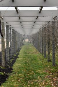 And here is the clematis pergola. As the fog lifts, or burns off, more and more of the grass, trees and shrubs can be seen. This happens as the sun's heat warms the ground and air. How much fog do you get where you live? Let me know in the comments section.