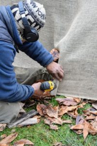 Here, Pete attaches wooden strips every two to three feet along the bottom of the hedge. The strips are about six to eight inches long – just long enough to accommodate two or three screws that will keep the burlap secure.