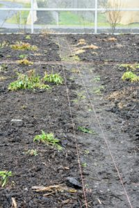 Orange colored garden twine is used to mark where the footpaths will be.