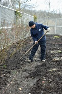 Here is Chhewang spreading the compost very carefully and neatly up to the twine. This will insulate and protect those early spring bulbs and perennials from fluctuating temperatures.