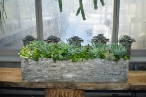 Succulents thrive in bright light and they should do nicely in this vestibule between my greenhouse and head house, where they can drink in lots of natural light even when the sun isn't directly over their pots.