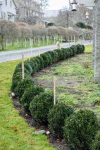 These wooden stakes are placed in between every three of the boxwood shrubs along the pergola.