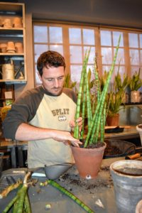 Ryan fits several independent Sansevieria plants into this pot - it will look great in a grouping.