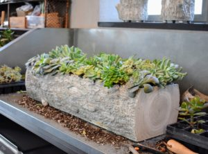 Shades of green are a given — but you can also find succulents that are blue, purple, pink, orange, and even red!