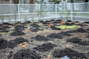 These are clumps of composted manure. The crew drops the compost in small amounts and then spreads two to three inch layers evenly throughout the garden beds.