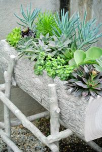This planter box of succulents was completed last year and placed on its stand.
