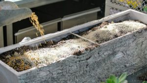We also use a mix of sand, perlite and vermiculite for best drainage. The right soil mix will help to promote faster root growth, and gives quick anchorage to young roots. Ryan also sprinkles some osmocote fertilizer. Osmocote particles are known as prills. The beige shell on the prill coats a core of nutrients – nitrogen, phosphorus and potassium.