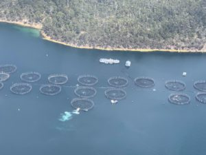 From above, we saw extensive fish and oyster farms in the waters around the coast.