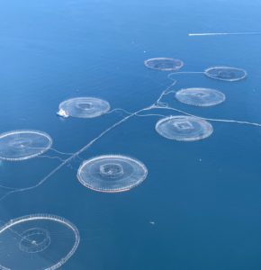 These round fish nets are for salmon.