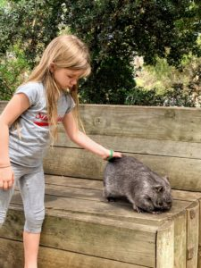 Here is Jude petting the wombat - she adored him. they are not often seen in the wild, but leave lots of distinctive evidence - cubic poop.