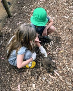 Due to strict wildlife regulations, most guests at the Sanctuary are not permitted to hold the animals, but if you're with a Bonorong expert, you can sometimes pet the animals. Bonorong is very protective, and never forces its creatures to interact with the public. These echidnas seemed to like our visit.