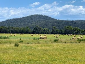The ride to our picnic location was over dirt roads through fields of luscious hay bales and grazing sheep.