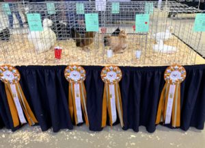 The birds are ranked in each of their classes and then compete for super champion.