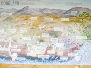 We learned about the Mooreland and all the different rocks and vegetation that make up the landscape.