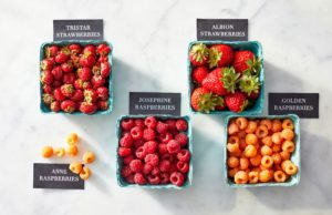 And berry expert, Franca Tantillo, joins me in episode-13 to talk about farm-grown and foraged berries. I grow so many berries at my farm - raspberries, strawberries, blueberries, gooseberries and so many more... I love eating them fresh by the handfuls and using them in my recipes. (Photo by Mike Krautter)