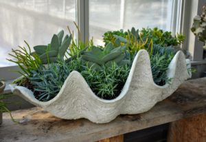 The seashell planter looks great displayed in the vestibule of my greenhouse.
