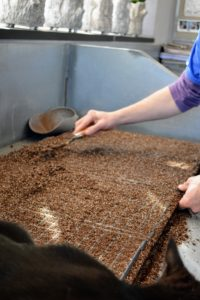 Ryan uses a scraper to level off the soil mix in the trays. The soil should be level with the top of the tray.