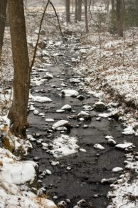 The streams in the woodland were all full - some even beginning to freeze.
