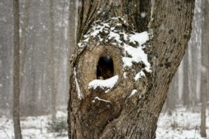 I hope all the woodland creatures are keeping warm in their dens.