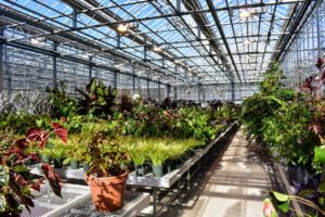 The Nolen Greenhouses are filled with rare, unusual and beautiful plants. This is an amazing suite of tropical plants getting ready for the summer exhibition, The Living Art of Roberto Burle Marx - the famed Brazilian plantsman, landscape designer, and artist.