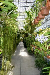 There are so many beautiful orchid plants. This is just one aisle full of thousands of amazing specimens.