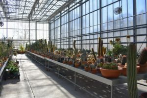 This greenhouse contains cacti of every size and shape imaginable.