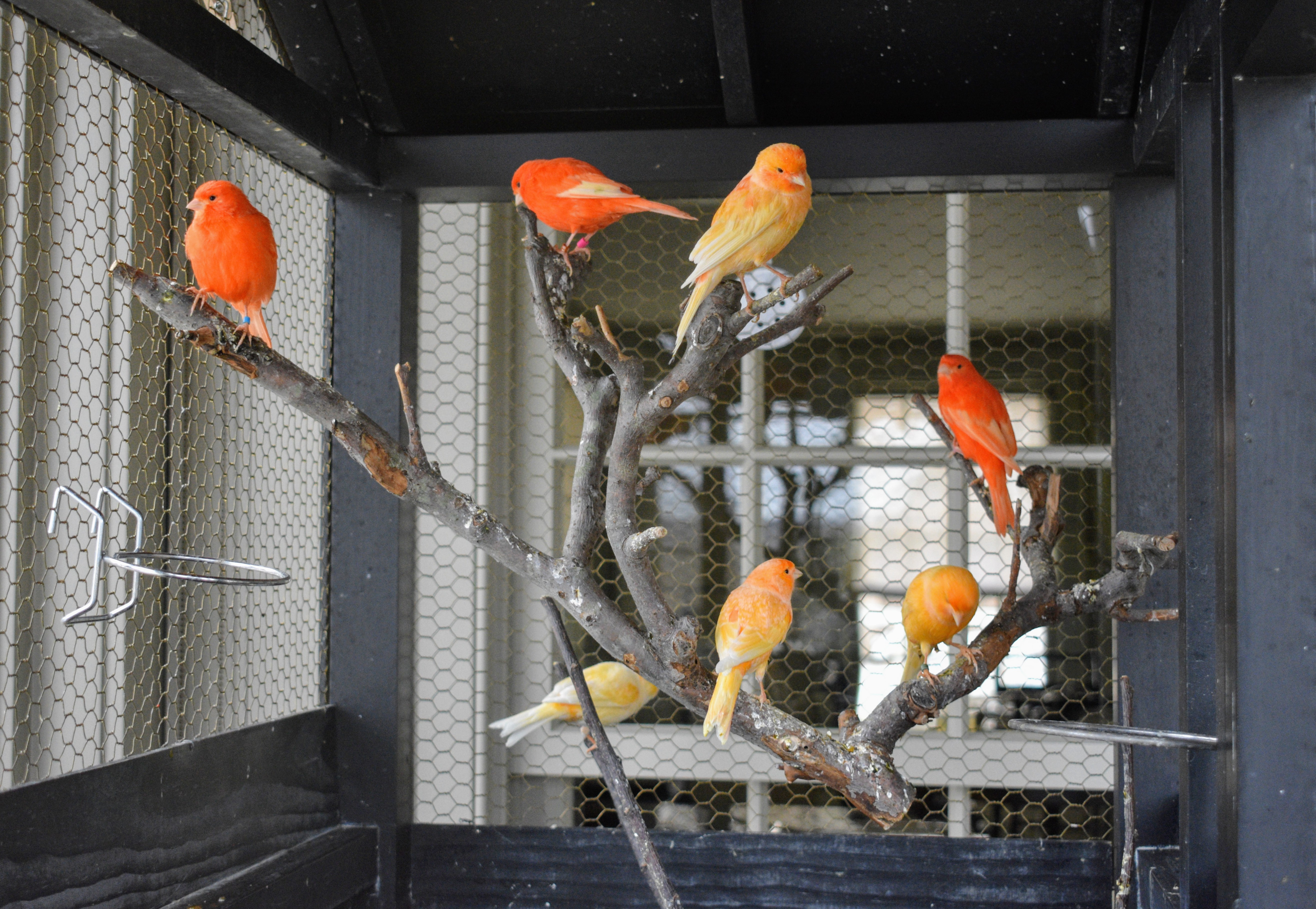 Daily Care For My Canaries The Martha Stewart Blog
