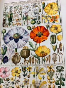 This work is by Johannes Gessner, Tabulae phytographicae, Zurich, 1795-1804.