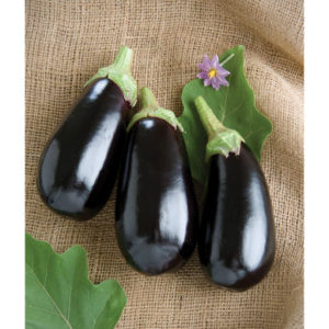 This is a traditional black Italian type called 'Nadia'. 'Nadia' produces dark purple fruits that are flavorful, glossy and blemish free. (Photo courtesy of Johnny's Selected Seeds)