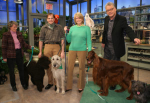 Petkeeper, Marc Morrone, joined me on set to discuss several Irish dog breeds, including the Irish Water Spaniel, the Irish Wolf Hound - tallest breed in the world, the Irish Setter, and the Glen of Imaal Terrier.