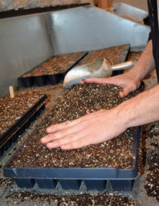 Because we seed so many plants, Ryan works in a production line manner in order to get as many trays started as possible. Here he is filling the trays with soil, ensuring each cell of the tray is filled to the top.