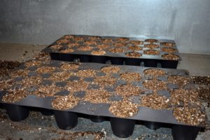 Ryan fills the seed starting tray with mix and pats it down lightly into each compartment. The soil should be level with the top of the tray. We seed many plants, so Ryan works in a production line manner in order to get as many trays started as possible.