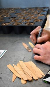 Ryan labels the seed markers and keeps them together with the matching packets. Seeds are usually started about two months before the last frost in the area. If you're not sure, check online or ask garden center associates when the last frost usually occurs in your location.