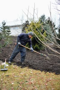 Here is Phurba spreading a three to four inch layer of mulch on one end of the pinetum. Over time, it will suppress weed germination, retain moisture, and insulate the soil.