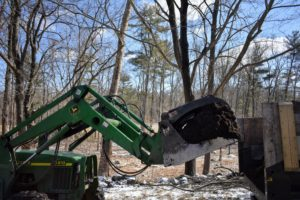 So, while the ground was still frozen, the outdoor grounds crew brought in lots of mulch and spread it all around the pinetum. Do you know the difference between compost and mulch? Compost is organic matter that has been decomposed over time, while mulch is the layer of organic materials used as a protective cover.