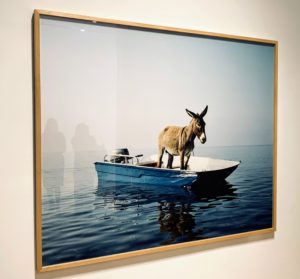 "Here is another photo piece called Untitled (donkey), (2003) - also part of Paola's ""Art with a View""."